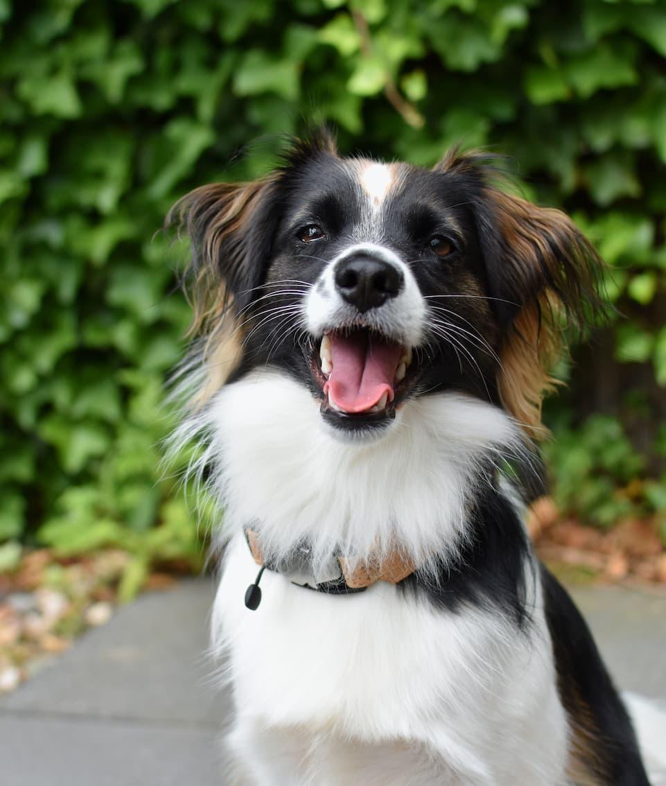 AirTag gebruiken voor hond